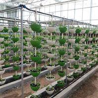 温室 立体种植 串盆吊挂式 基质栽培