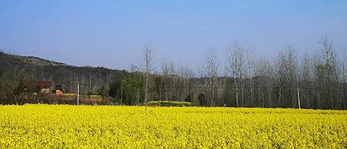甘肃省农业农村厅关于下达2020年省级农业生产救灾资金的通知