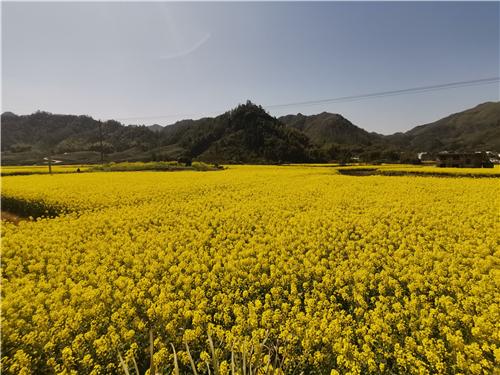 助推乡村振兴:安徽省出台设施农业用地管理政策