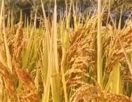 广西关于2020年第七批农业机械试验鉴定结果的通报