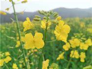 农业农村部推介246个2020年中国美丽休闲乡村