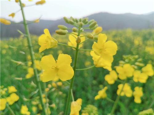 全国农村人居环境整治工作培训班在江西横峰举办