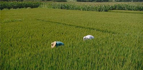 揭秘—浙江大学农业信息技术研究所 何勇所长确定出席PIS2020中国国际精准农业与信息化高峰论坛!