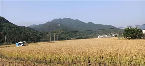 江苏苏州全力推动农机化护航秋收秋种